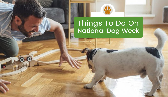 Things To Do During National Dog Week