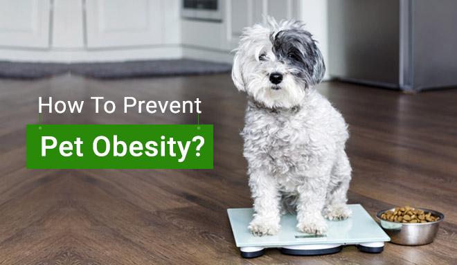 How To Prevent Pet Obesity?