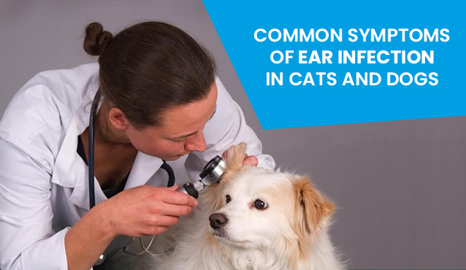 Symptoms Of Ear Infection In Cats And Dogs