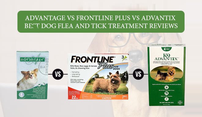 Fleas and ticks treatment