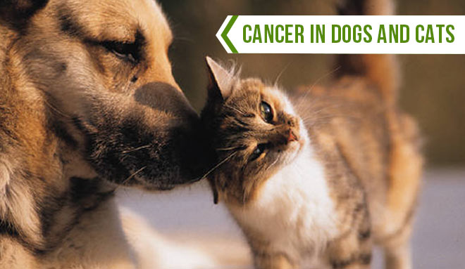 cancer in dogs and cats