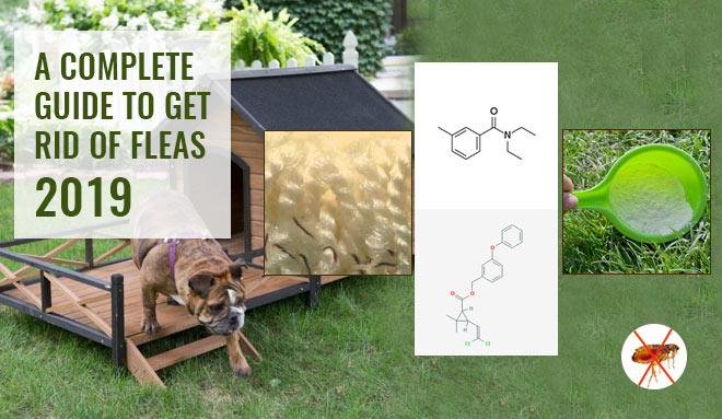 How To Get Rid Of Fleas In A Backyard
