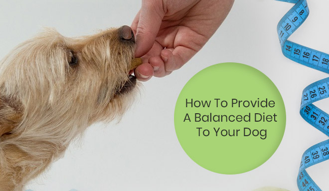 A Balanced Diet To Your Dog
