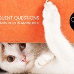 Most-Frequent-Questions-about-Tapeworms-in-Cats-Answered