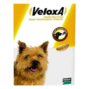 Veloxa for Dog